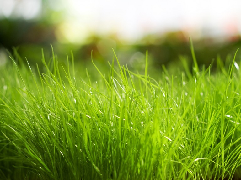 fresh-grass-background-presentations